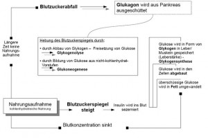 Insulin - Glukagon