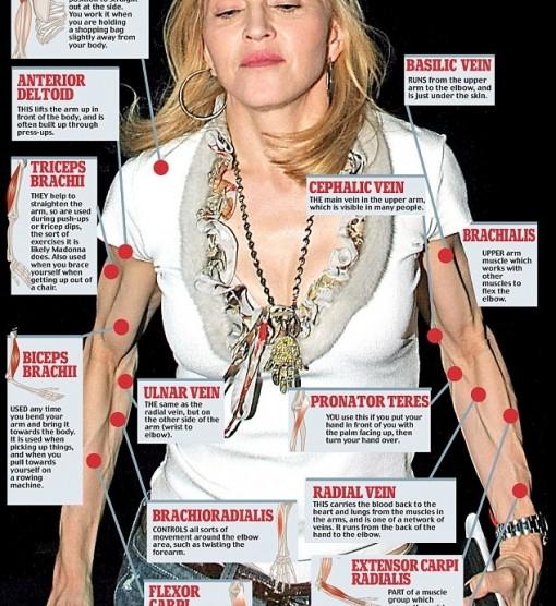 Anatomie lernen an Madonna | Herr Pfleger